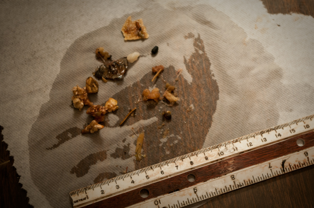 Northern Fulmar Stomach Contents