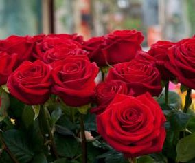 close-up-of-red-roses-in-a-bouquet-during-sant-jordi-festival-barcelona-catalonia-spain
