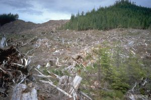 forest-area-clearcut-by-macmil